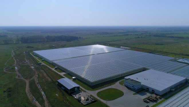 Large Greenhouses For Growing Vegetables: Stock Video