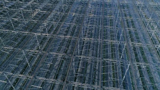 Industrial Greenhouses: Stock Video