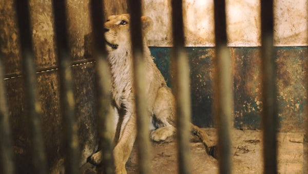 Left to die in an illegal zoo: Bulgaria