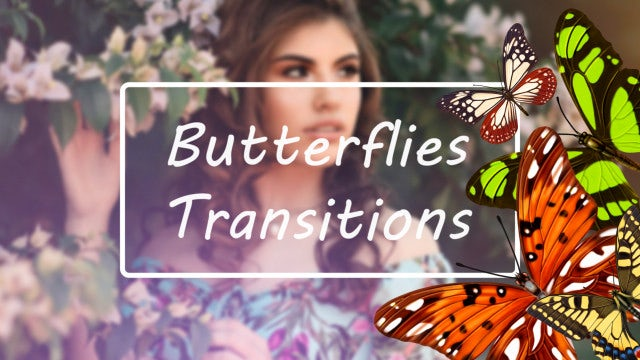 Butterflies Transitions: Stock Motion Graphics
