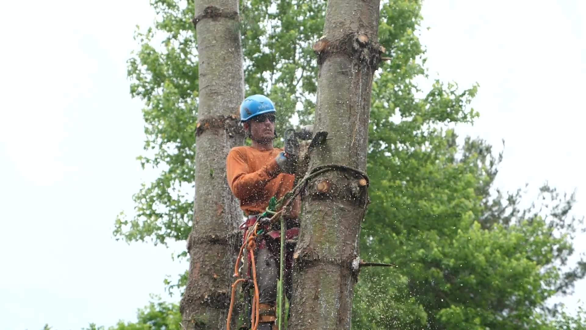 Promo | Ascender Tree Co.