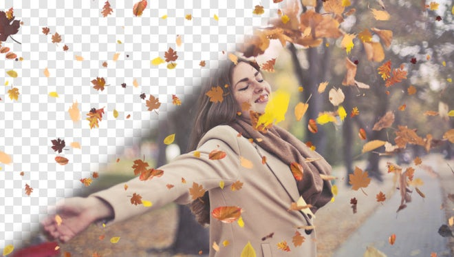 Autumn Leaves Overlays: Stock Motion Graphics