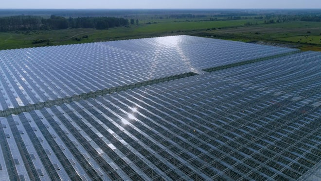 Aerial View Of Industrial Greenhouse : Stock Video