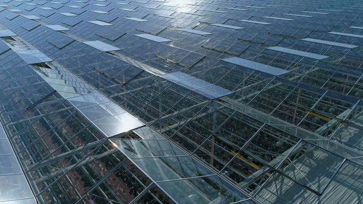 Industrial Greenhouses With Solar Panels: Stock Video