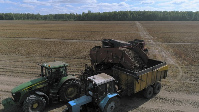 Harvester Pouring Potatoes Into Trailer: Stock Video