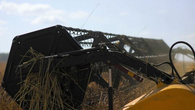 Combine Harvester Harvesting Wheat: Stock Video