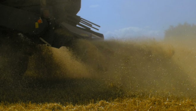 Harvester Spraying Chaff On A Field: Stock Video