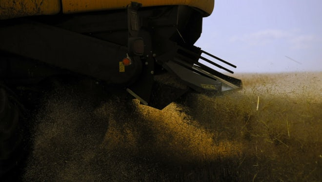 Harvester Spreads Grains Close Up: Stock Video