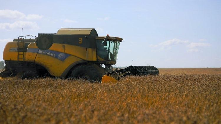 Harvester Harvesting Summer Grains: Stock Video