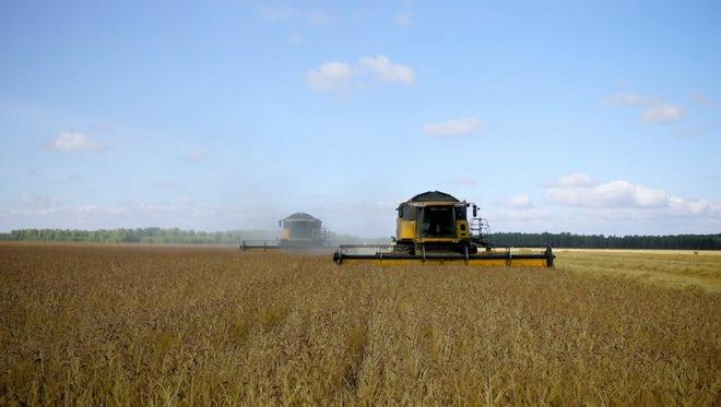 Combine Harvesters In Grain Field: Stock Video