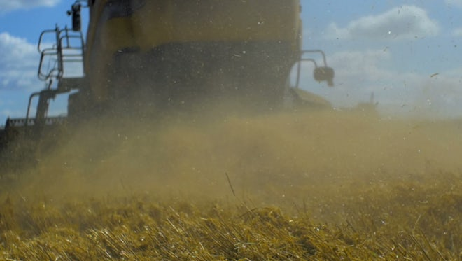 Harvester Mowing Wheat Farm: Stock Video