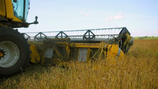 Combine Harvester Harvesting Wheat: Stock Video